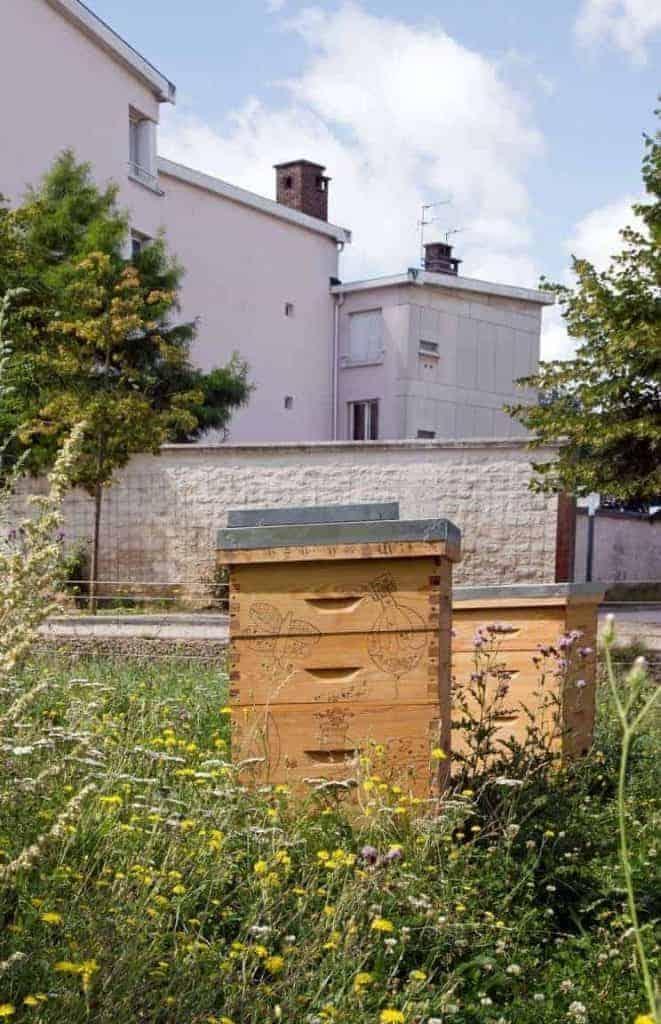 Beehive in urban garden