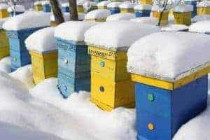 Beehives in winter