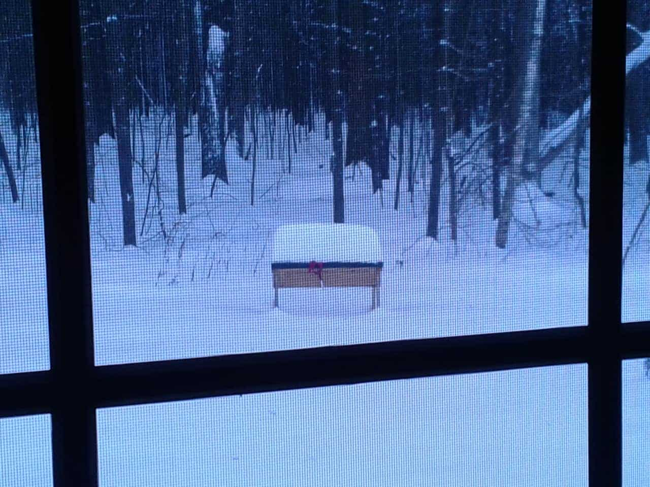 My Beehive In The Snow