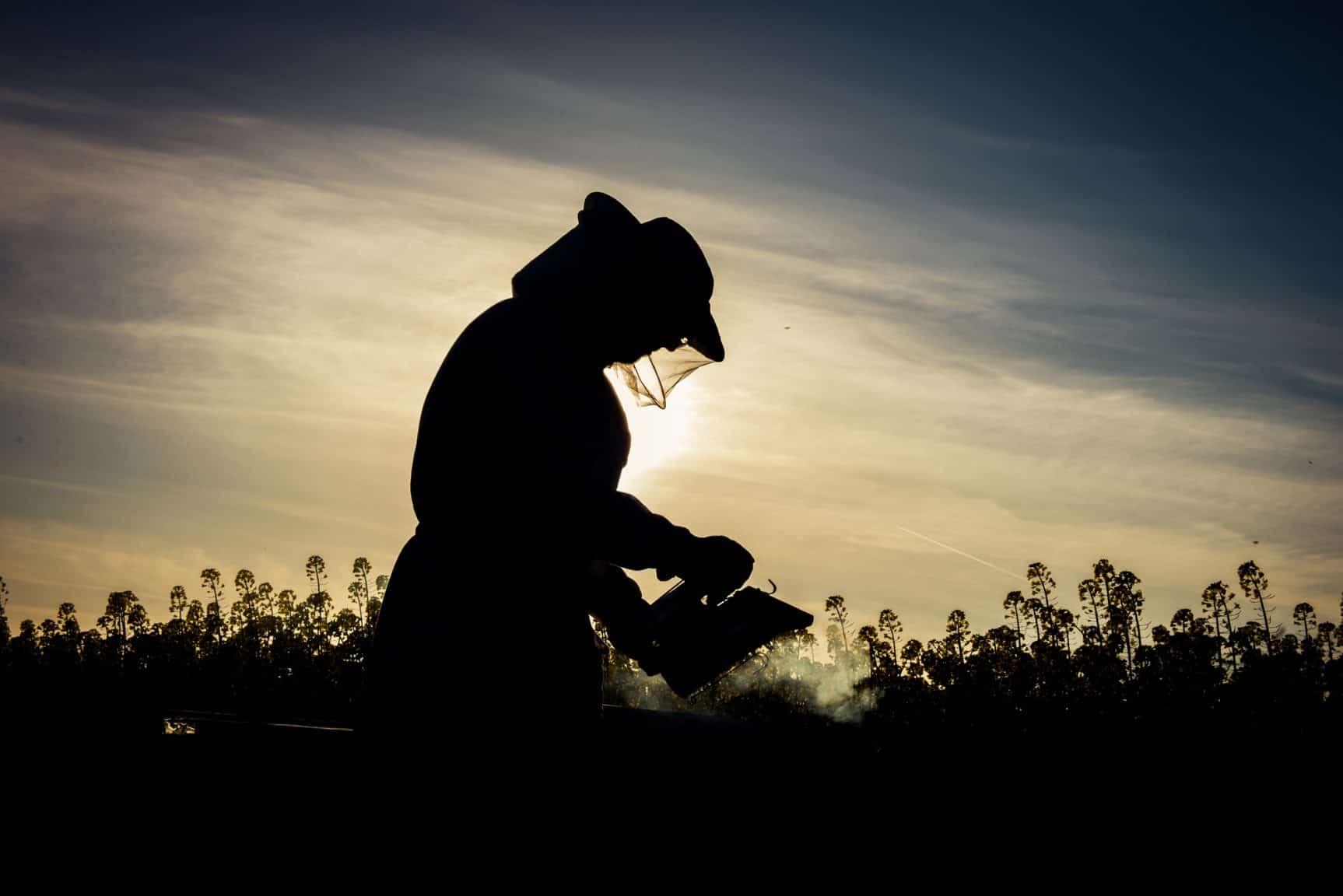 Beekeeper at dusk