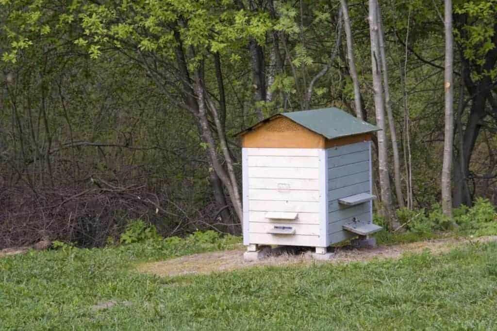 Beehive on slope