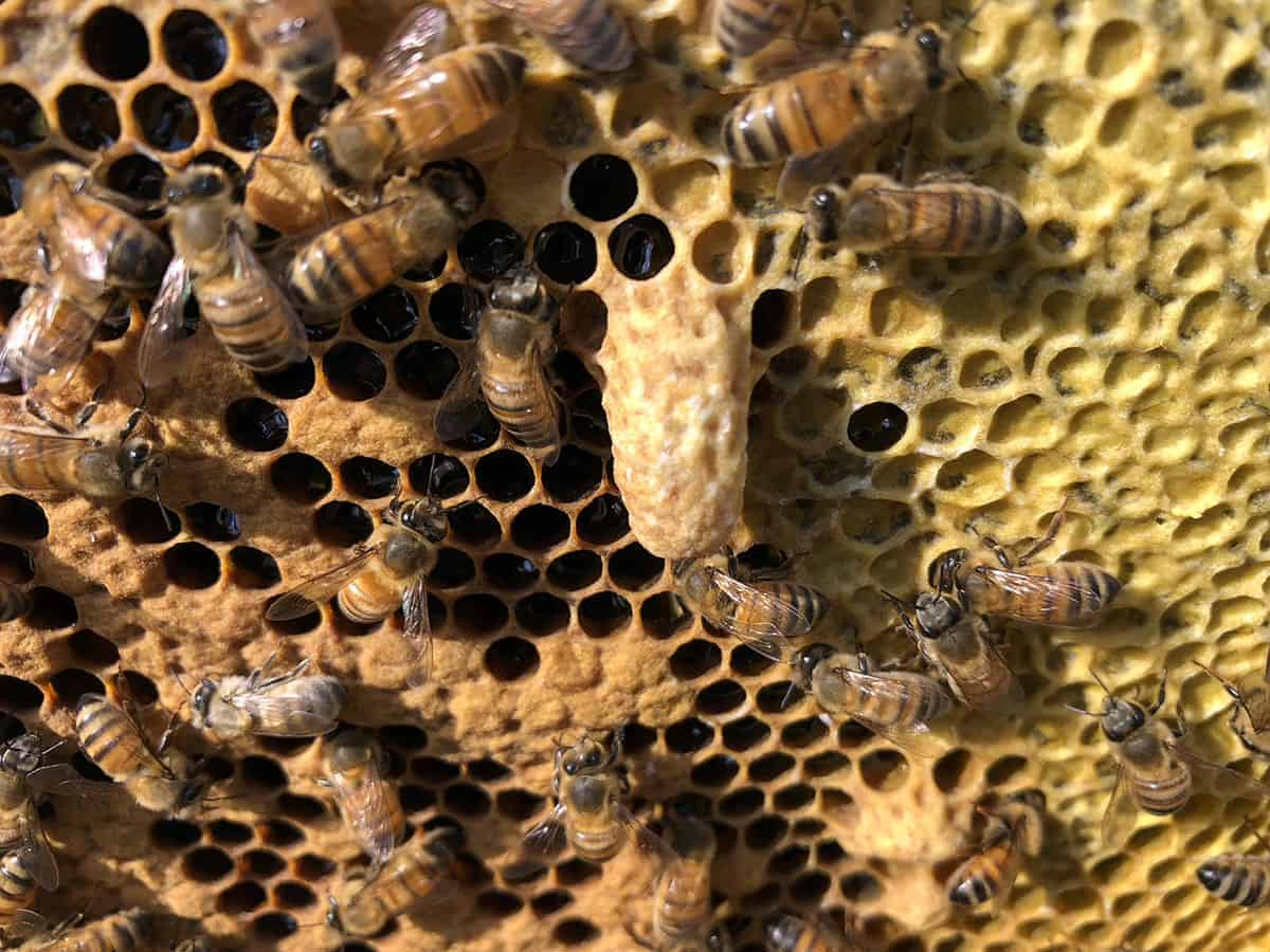 Inside and Out of the Beehive - PerfectBee