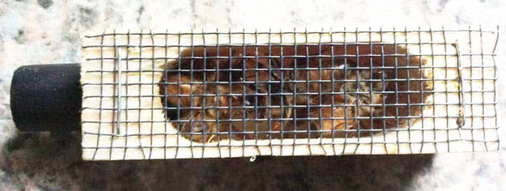 Caged Carniolan Queen