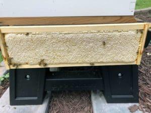 A Frame of Honey