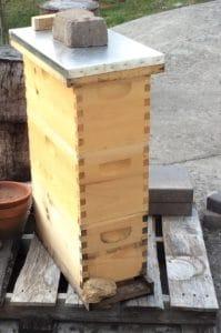 A Nucleus Code - Hive Rome
