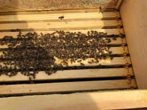 Hive Acquitaine Winter Cluster