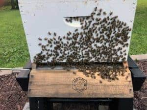 Line Dancing at Hive Asgard