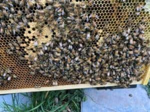 Hive Florence