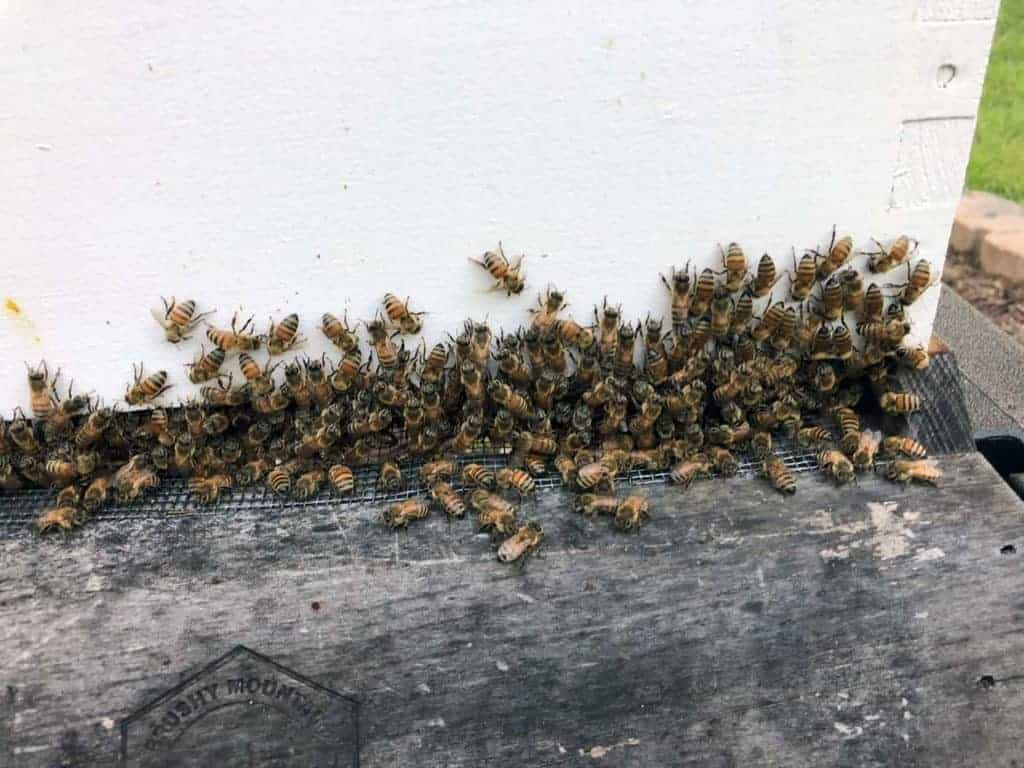 Hive Florence's Population