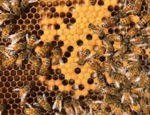 Closeup of the Brood - Hive Rome