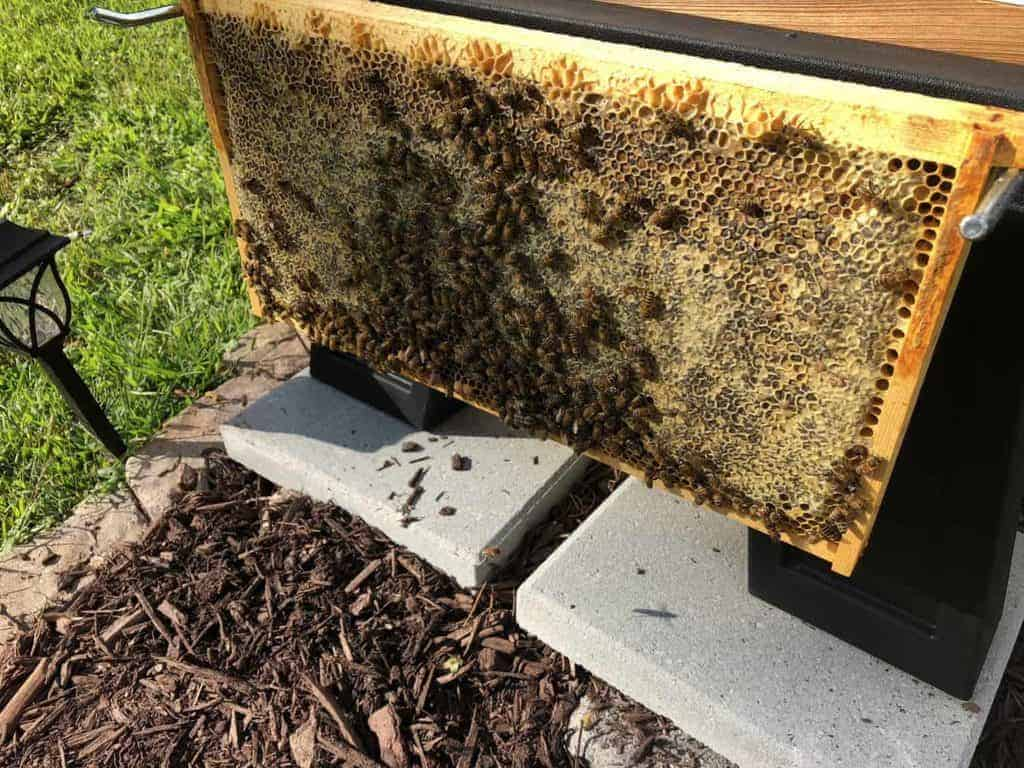 Honey Frame in Hive Wales