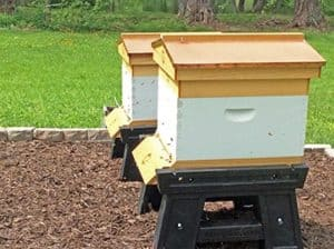 New Bee Hives - Week One