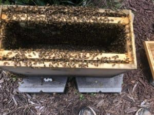 The Nuc Box Full of Bees