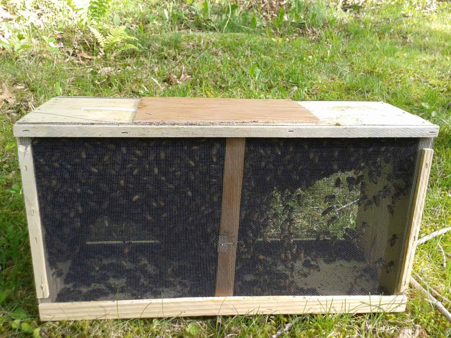 Bee Package
