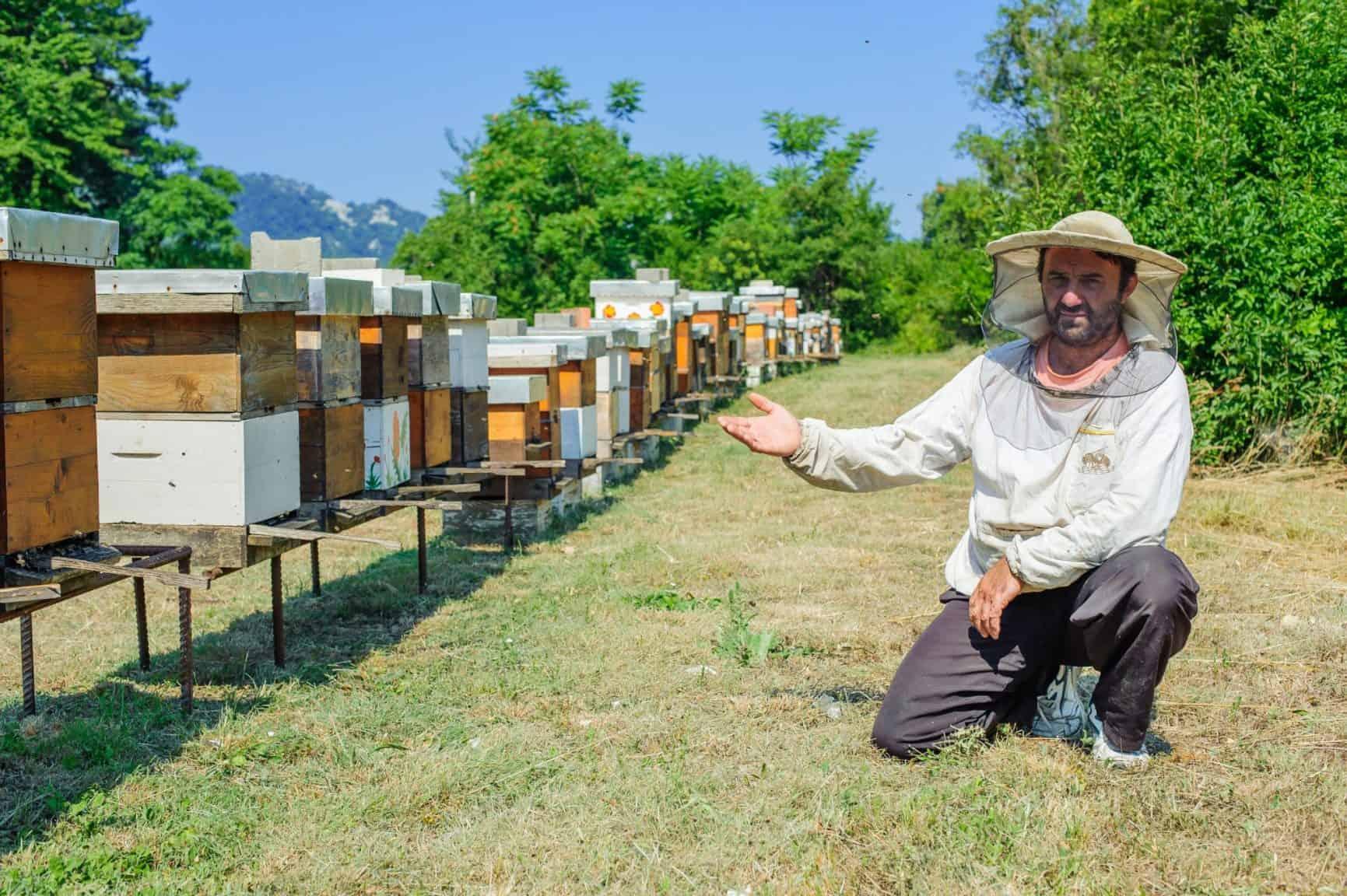 Beehive location