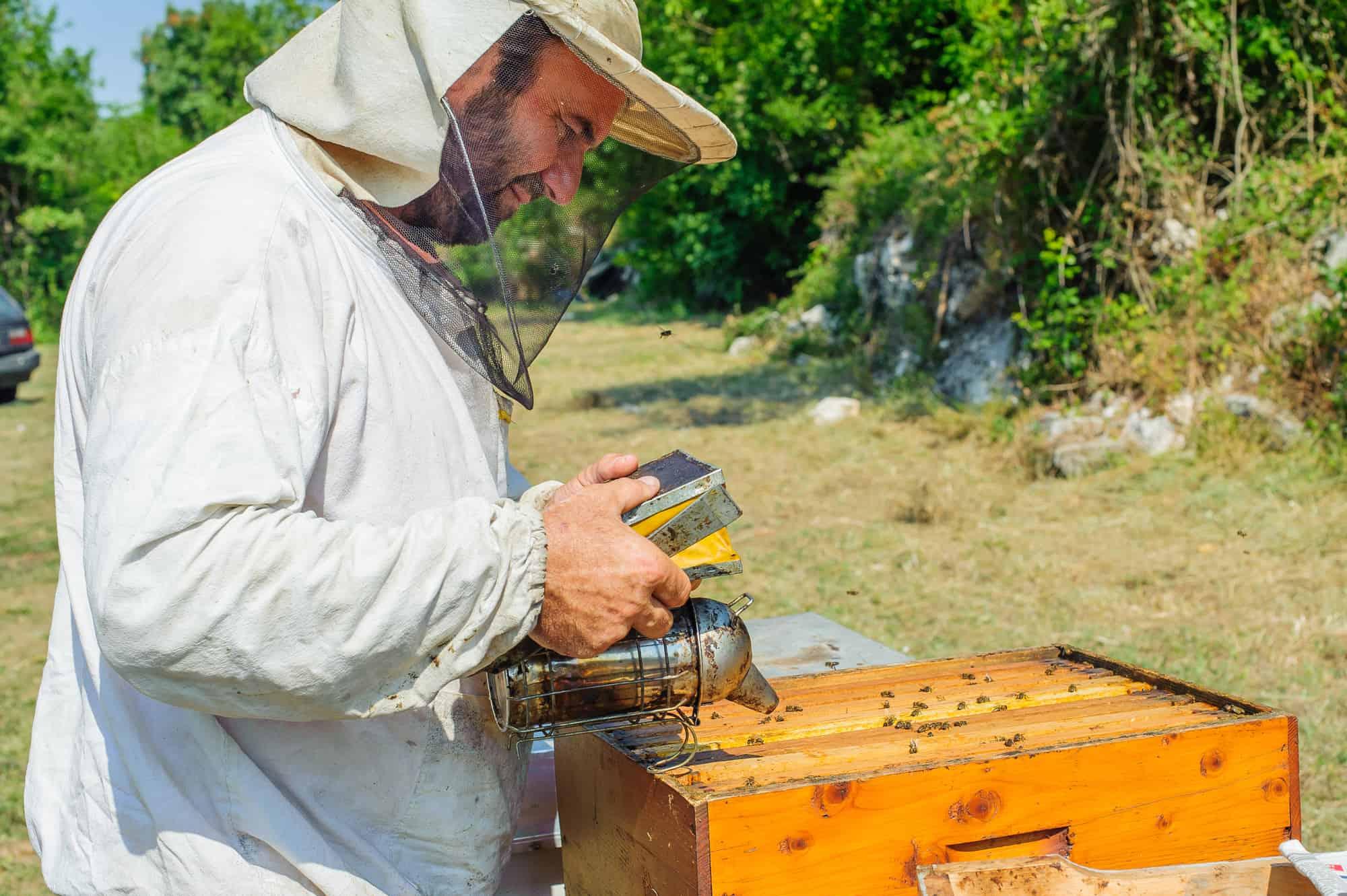 Beekeeper inspecting hive