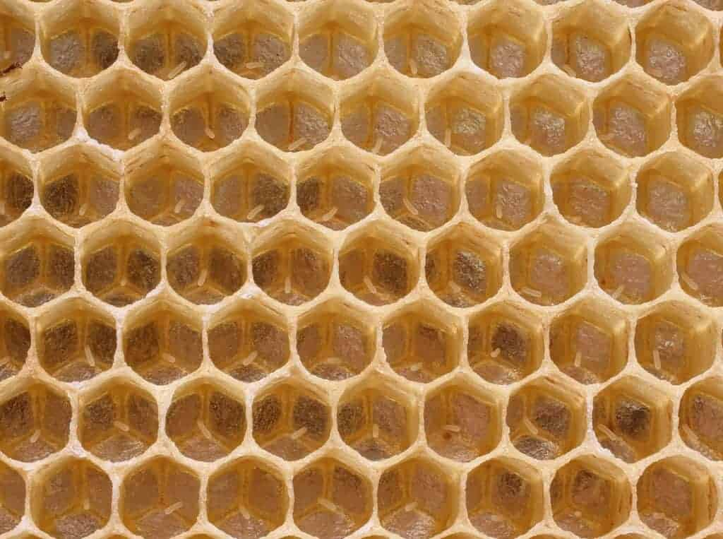 Eggs in honeycomb
